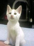 koneko_1.jpg